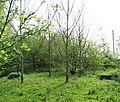 Wisbech and Upwell tramway - remains of Basin Bridge - geograph.org.uk - 1261403.jpg