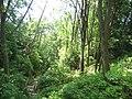 Wreckbeach-trail4.jpg