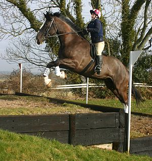Horse jumping obstacles - Horse negotiating uphill bank