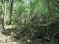 Xtobó, Yucatán (01).jpg