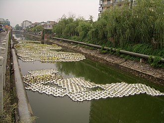 Aquaculture - Cultivating emergent aquatic plants in floating containers