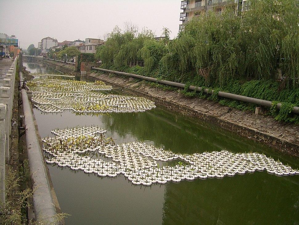 Yangzhuanghe - CIMG3404