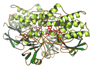 Flavin-containing monooxygenase