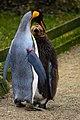 Zürich Zoo DSC 6258 3 (13389662904).jpg