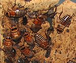 Zebra Bug.jpg