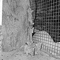 Zeven jonge leeuwen in Burgers Dierenpark te Arnhem, de jonge leeuwtjes, Bestanddeelnr 916-5999.jpg