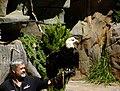 Zoo Eagle 082.jpg