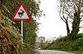 """Deer"" sign near Downpatrick - geograph.org.uk - 2143089.jpg"