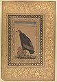 """""""Red-Headed Vulture"""", Folio from the Shah Jahan Album MET DP246548.jpg"""
