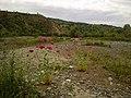 Çayşiro çiçekleri - panoramio.jpg