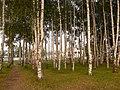 Березовая Роща на Тверицкой набережной - panoramio.jpg