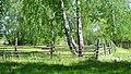 Березовый лес. - panoramio.jpg
