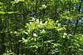 Ботанический сад, Минск - panoramio (1).jpg