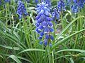 Весняні квіти.JPG