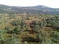Вид на главную вершину хребта Большой Шатак - panoramio.jpg