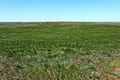 Вид с высоты 262 - panoramio (1).jpg