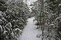 Гарупе (Латвия) Тропинка в молодом сосновом лесу - panoramio.jpg