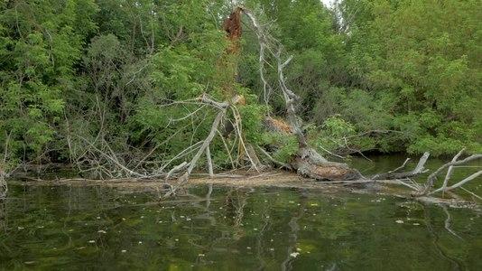 File:Дерево у річці Перебійна.webm
