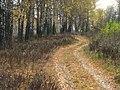 Дорога усыпанная листвой. Road strewn with leaves. - panoramio.jpg