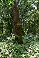 Дуби Екзюпері DSC 0553.jpg