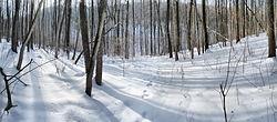 Дубрава в конце зимы.jpg