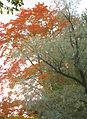Елагин остров. Осень2.jpg