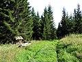 Лес mežs - panoramio - Aleksandrs Timofejev… (3).jpg