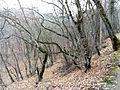 Ліс у с. Тополівка.jpg