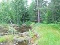 Между с-т Русь и Селиванихой 2013 - panoramio (15).jpg