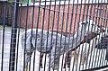 Московский зоопарк. Фото 17.jpg
