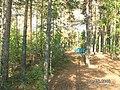 Мыс на озере Нижнее посадское - panoramio.jpg