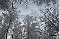 Небо - panoramio (2).jpg