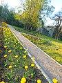 Одеса, Ботанічний сад, Французький бульвар 04-2018 12.jpg