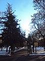 Сад городской «Липки».jpg