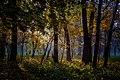 Серед сонних дерев.jpg