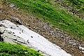 Стадо серн на cклонах горы Аибга.jpg