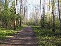 Тропинка в Балотовском парке, 19 мая 2013 - panoramio.jpg