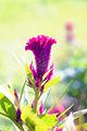 Цветок ботанического сада 01.jpg