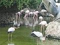 باغ پرندگانGarden Birds - panoramio (3).jpg