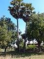 หมู่บ้าน นาพิพาน ต.ปะโค เมือง หนองคาย - panoramio (18).jpg