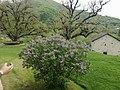 აკაკი წერეთლის სახლის ბაღი.jpg