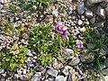 'Ayn Fashkhah, Einot Tzukim, Dead Sea,Palestine 05.jpg