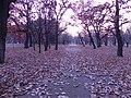 かしわの路(Orange road) - panoramio.jpg