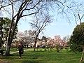 南京玄武湖樱洲 - panoramio (1).jpg