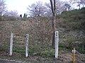 富士桜(うつぶな公園) - panoramio.jpg