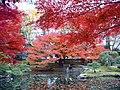小石川植物園(2009.11.28撮影) - panoramio (1).jpg