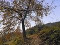 爬岜沙苗寨-桂穿越 - panoramio (4).jpg