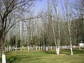 白杨 - panoramio.jpg
