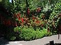 祈福树上的红绸带 - panoramio.jpg