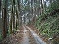 道路 - panoramio (1).jpg